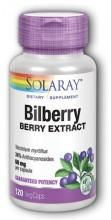 Bilberry - Blåbær