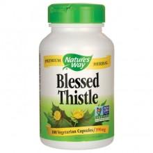 Blessed Thistle ( Benedikterurt)